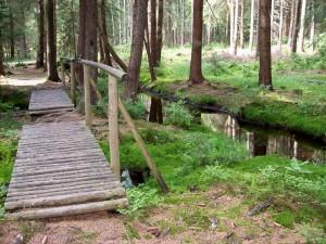 21 Brücke in der Wildnis